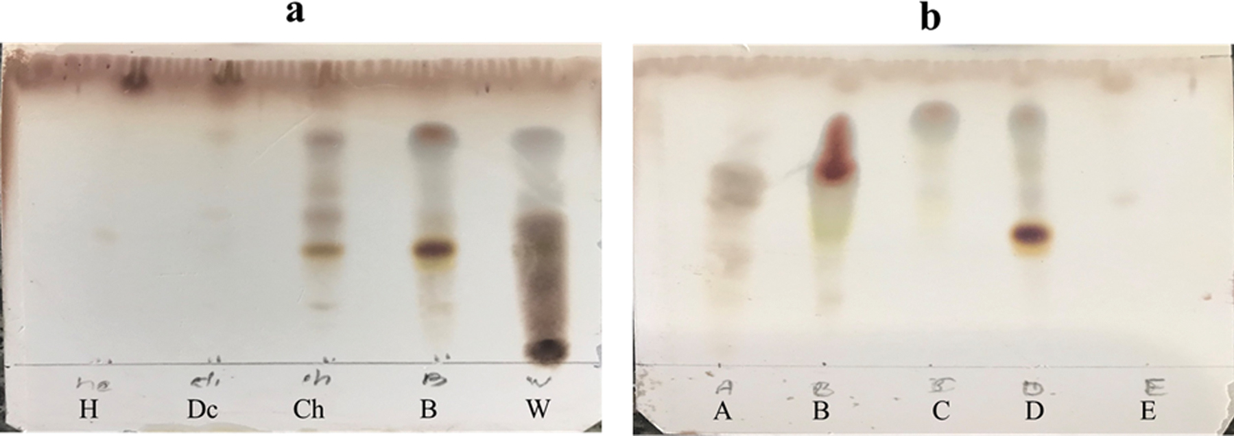 Figure 2: (A) Thin-layer chromatography (TLC) profile of partitions of <i>Verbascum alceoides</i>. H, Dc, Ch, B, and W represent hexane, dichloromethane, chloroform-methanol, butanol, and aqueous partitions, respectively. (B) TLC profile of fractions of butanolic partition of <i>V. alceoides.</i> Fraction D showed the well-known representative saponins